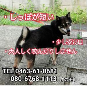 迷子犬の写真